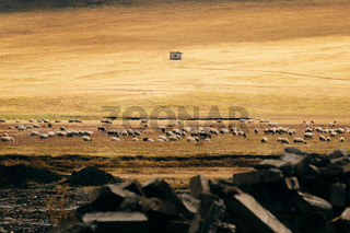 Field of Sheep in Highland Cliffs Rocky Herd Farm Land Green Grass Hut Animals in Wild Depth of Field
