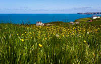 flower field - Tintagel - Cornwall