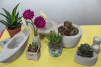 Gerbera and succulents planted decorative in handmade concrete shells - closeup floristry