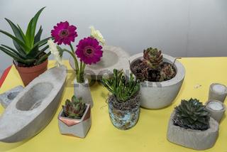 Gerbera und Sukkulenten dekorativ in handgemachte Betonschalen gepflanzt - Nahaufnahme Floristik