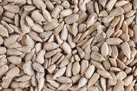 Sunflower seeds format filling