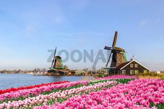 Rotterdam Netherlands, Dutch Windmill at Kinderdijk Village with tulip field