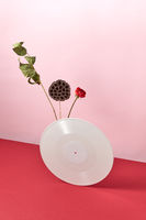 Vinyl retro record decorated with dry branches and a red flower on a duotone pink red background with copy space