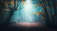 Mystical forest in blue fog in autumn. Colorful landscape