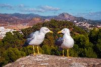 seagulls by talking