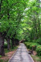 summer scene in dream forest park