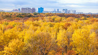 panoramic view of park in sunny autumn morning