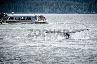 whale watching near skagway alaska