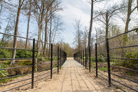 Path with metal bridge in dutch forest