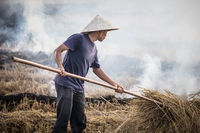 Vietnam Crop Burning