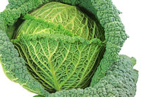 Isolated fresh savoy cabbage head