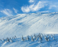 Icy snowy fir trees on winter hill