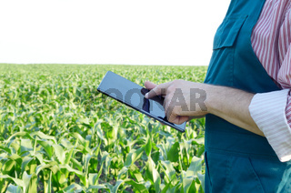 Farmer with tablet computer inspecting corn field