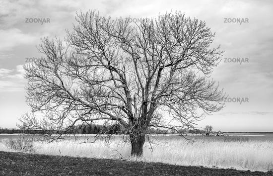 Tree at the Lebbiner Bodden