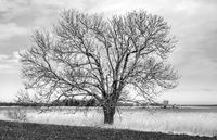 Tree at the Lebbiner Bodden