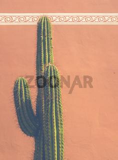 Southwestern USA Cactus Detail