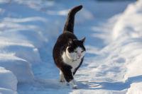 Cat in winter season