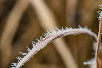 Ice Crystals around frosted plant in winter