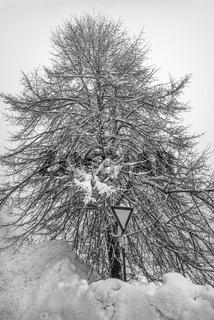Winter im Vogtland - Im Schnee versunken