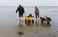 Pedestrians pulling a handcart across the mudflats, Wadden Sea National Park, Westerhever,Germany