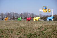 Colorful bulls Pirmasens