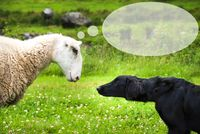 Dog Meets Sheep, Speech Balloon, Copy Space