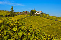 Fall in the vineyards of the La Côte wine-growingFechy, Vaud, Switzerland