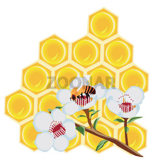 A  honeycomb and a bee on a flower