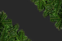 Pine branches on black paper
