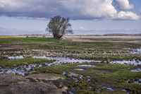 Marsh landscape on the island of Ummanz