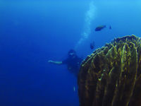 Diver swimming towards a coral at Amed, Sunken ship diving site, Bali, Indonesia.