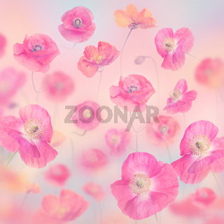 pastel floral background with poppies