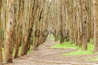 Eucalyptus Grove Wood Line on a winter day.