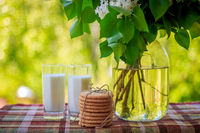 Milk in glasses and branches of lilac in a vase. Milk in a glass, branches of a lilac bush in a vase, cookies. Breakfast in nature