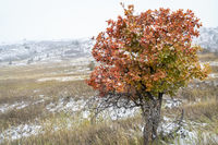 snow blizzard and fall colors in Colorado