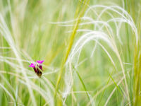 Little flower with feather grass at the meadow