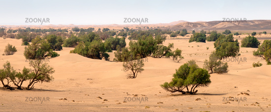 Sand dunes and trees in Sahara desert