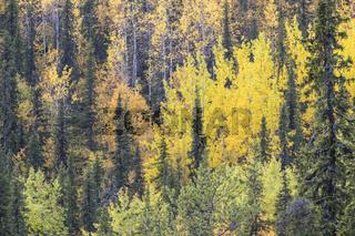 Herbstwald, Dundret Naturreservat, Lappland