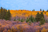 A hillside covered in colorful autumn trees