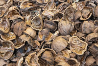 close up view of shattered walnut shells. Textured background of drought walnut shells