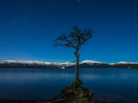 Lone Tree at Loch Lomond