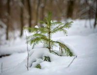 Small Christmas tree in the winter forest