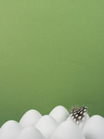 Easter background with white Easter eggs and a feather isolated on green