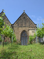 Minden - Viticulture in front of St. Mary's Church, Germany