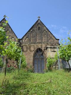 Minden - Weinanbau neben St. Marien, Deutschland