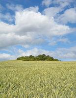 Wheat Field on Ruegen,Mecklenburg western Pomerania,Germany