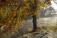 autumn, spelt, morning fog