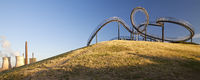DU_Tiger and Turtle_63.tif