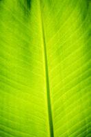Green palm leaf macro view