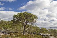 Fjell landscape on the island Ertvagoy